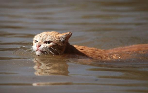 Розлючений кіт став об єктом для мемів у Мережі