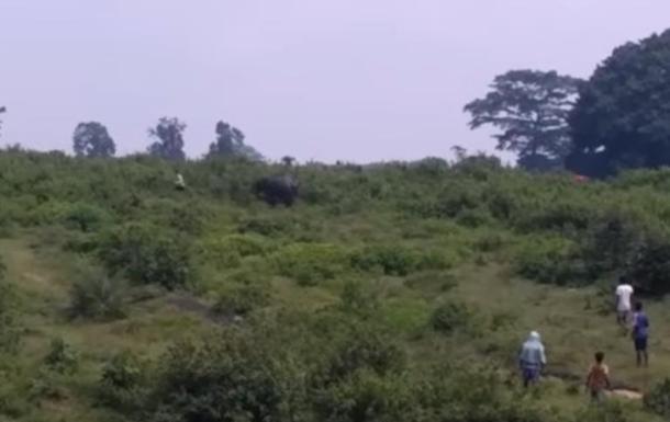 Слон до смерті затоптав чоловіка через селфі