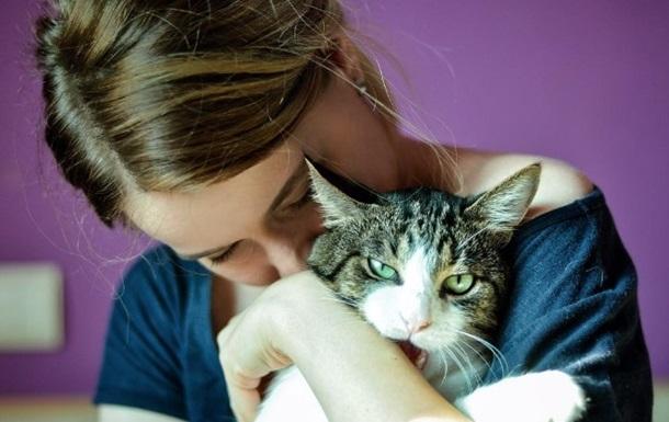 Безпритульний харківський кіт отримав господарів і славу