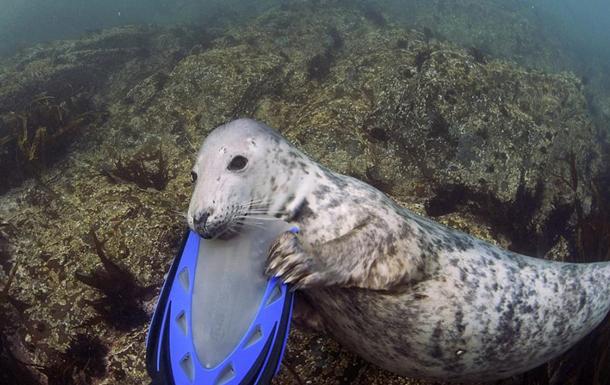 Тюлень-детеныш попытался украсть у дайвера камеру