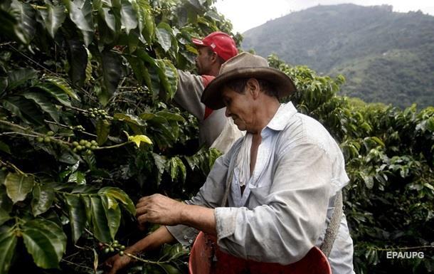 Вчені: Кава може зникнути до 2050 року
