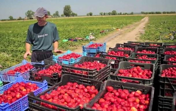 Польша хочет ввести налог на работников из Украины