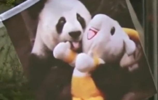 В Китае умерла самая старая гигантская панда