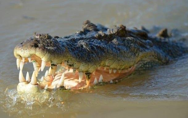 На Шрі-Ланці крокодил роздер британського журналіста