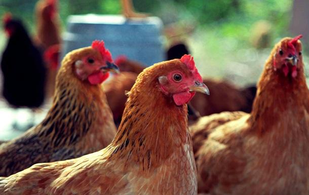 МХП Косюка думает над покупкой польского производителя курятины