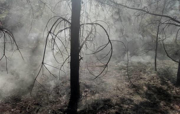 ДСНС: Загашені дві масштабні пожежі в лісгоспах