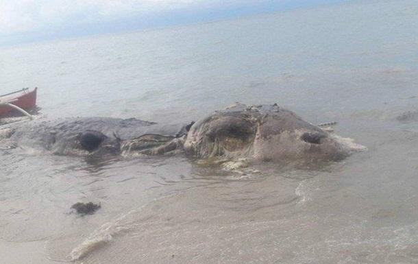 На узбережжі Філіппін знайшли невідому тварину