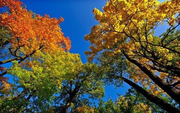 У Києві настала метеорологічна осінь