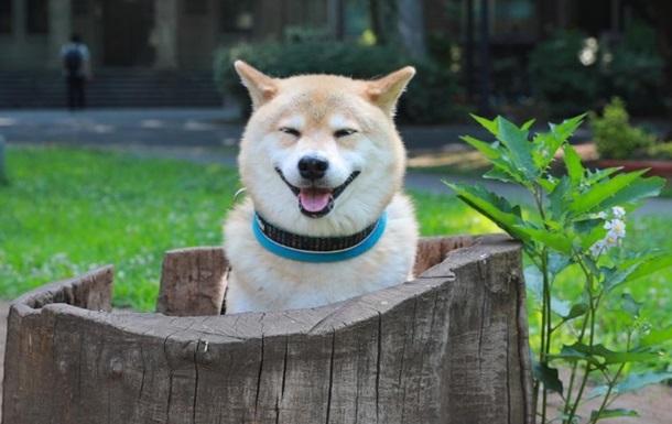 ЗМІ показали найбільш мемного собаку інтернету