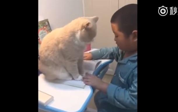 Пухлый кот не дал мальчику делать домашнее задание