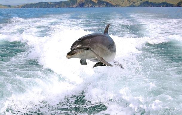 Из Крыма пытались вывезти двух дельфинов