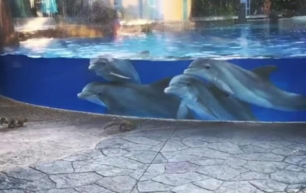В США дельфины засмотрелись на белок в океанариуме