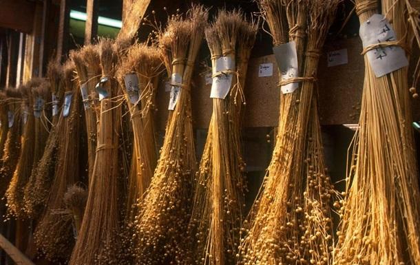 Україна експортувала рекордний обсяг льону