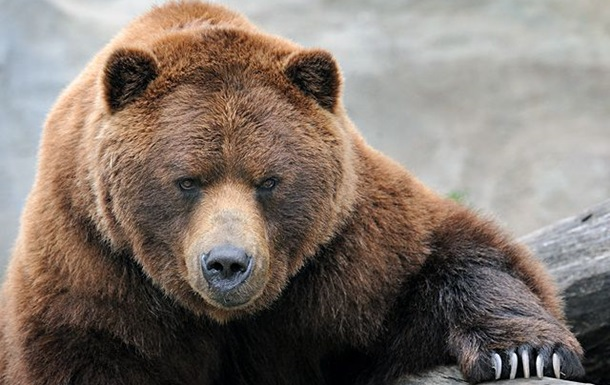 У США ведмеді побенкетували в ресторані