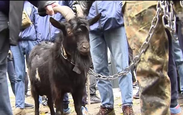 Під посольство Чехії в Києві привели козла