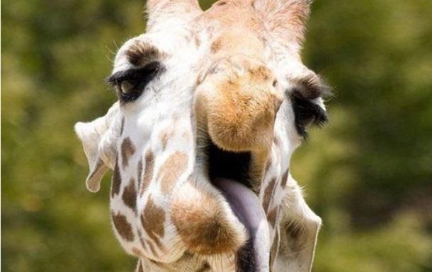 СМИ показали  самые неудачные  фото животных