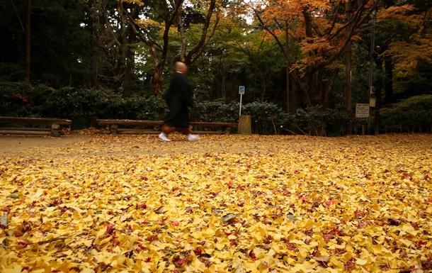 Мінекології просить не спалювати опалого листя