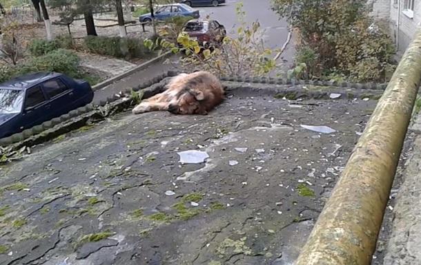 У Луцьку собаку викинули з дев ятого поверху