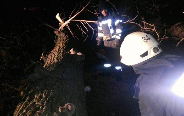 В Киевской области упавшее дерево убило женщину