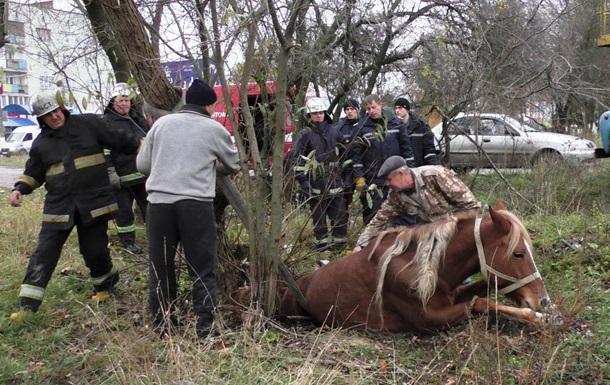 У Житомирі кінь провалилася в каналізацію