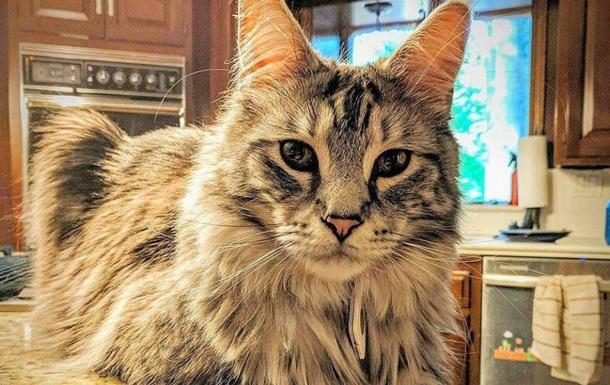 В США объявили награду в $100 тысяч за пропавших котов