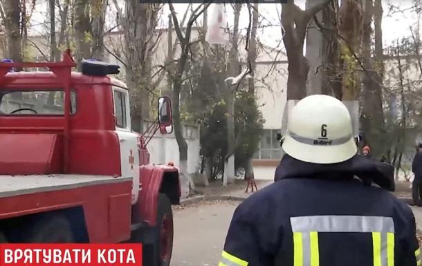 В Одессе кота более двух суток снимали с дерева