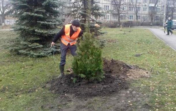 В Киеве высаживают  антивандальные  елки