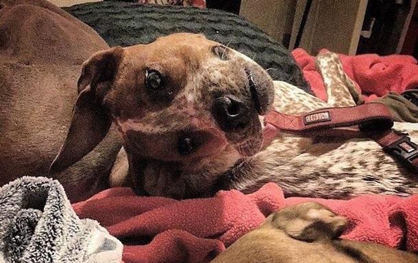 Користувачів Мережі спантеличило фото  знівеченого  собаки
