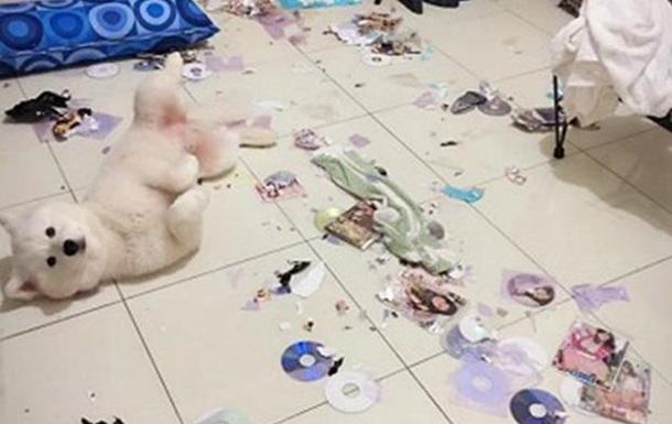 Собака сгрызла коллекцию фильмов для взрослых