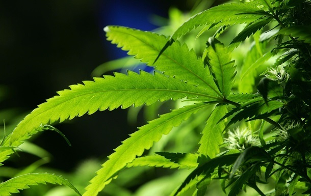 В Грузии разрешили употребление марихуаны
