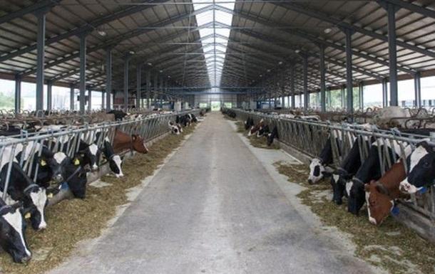 В Украине сокращается производство молока