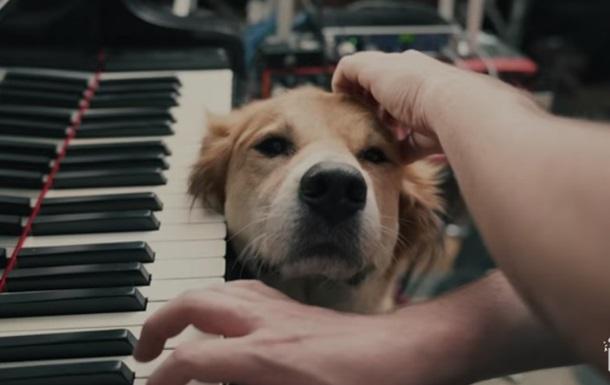 Требующий внимания пес музыканта умилил Сеть
