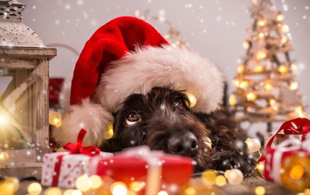 Новый год 2018: что означает год Желтой Собаки