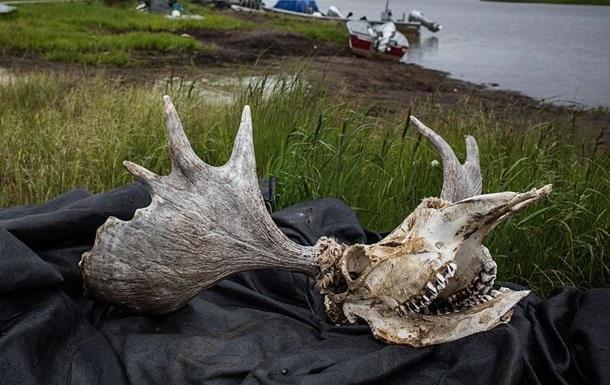 Минэкологии внесло лося в Красную книгу Украины