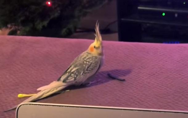 Поющий мелодию iPhone попугай увидел видео с собой