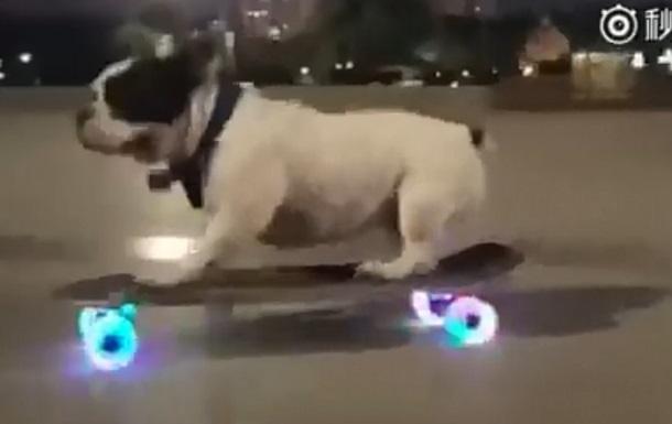Сеть удивило видео с бульдогом на скейтборде