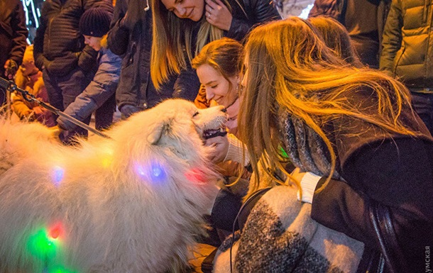 В Одесі відбувся парад собак породи самоїд