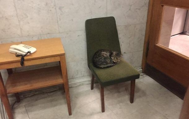 МИД Украины  приняло на работу  кота