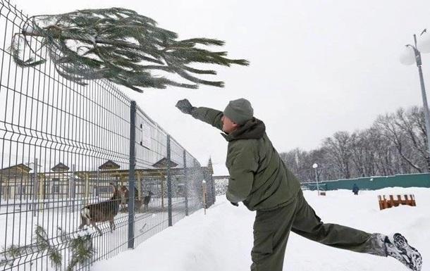 В Межигорье просят привозить ненужные елки козам и оленям