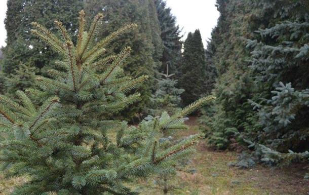 В Киеве откроют пункты приема новогодних елок