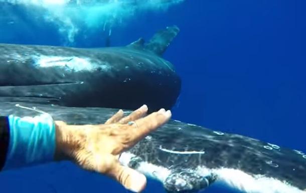 Горбатий кит врятував жінку від акули