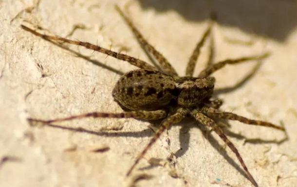 В США мужчина поджег паука и лишился дома