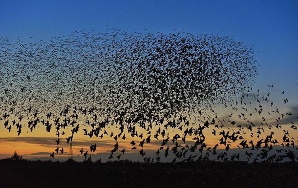 В Херсонской области погибли тысячи диких птиц