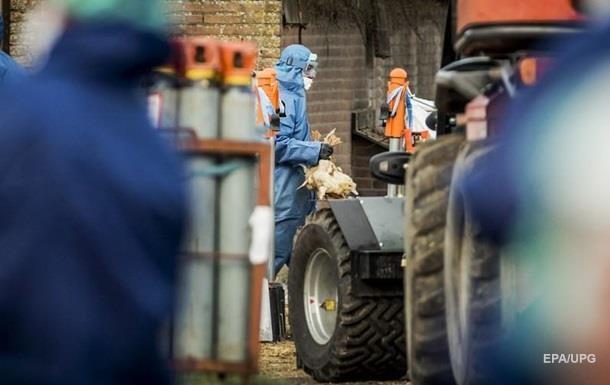 У Британії виявлено нові випадки пташиного грипу