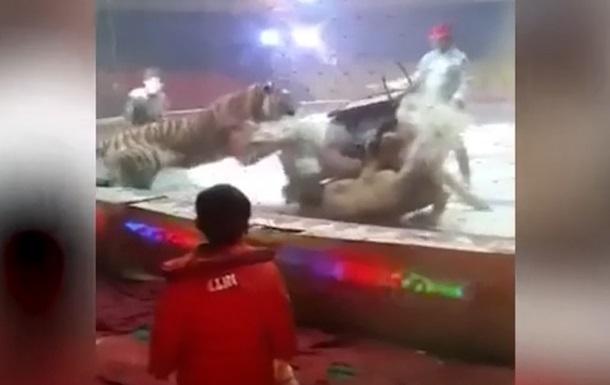 В цирке дрессированные лев и тигр атаковали лошадь