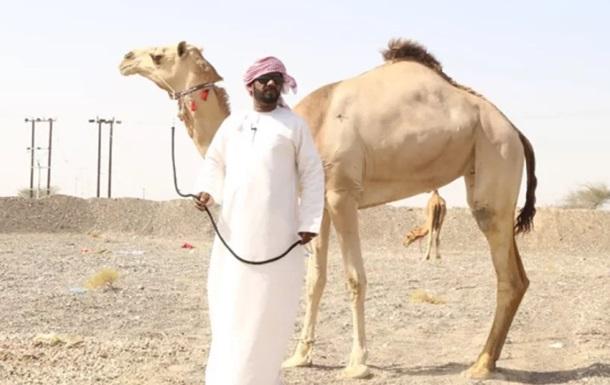 З конкурсу краси верблюдів вилучили через ботокс