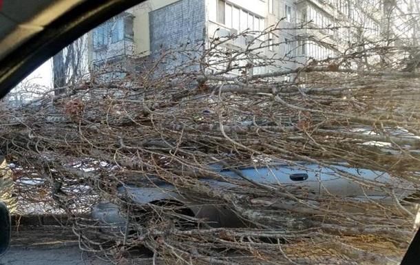У Києві тополя впала на припарковані авто