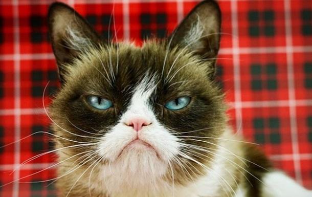 Хозяйка хмурой кошки выиграла суд по мему