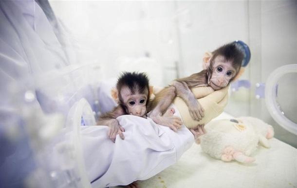 В Китае показали успешно клонированных обезьян