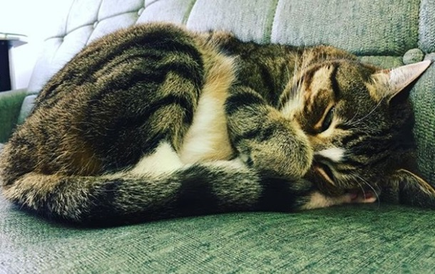 Работающая в салоне красоты кошка удивила Сеть